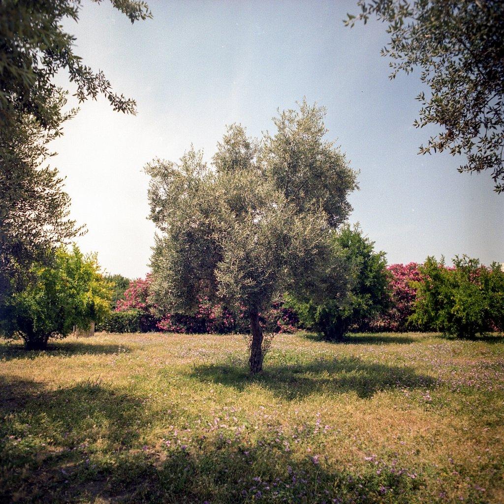 2018-07-3-ANA-ItalienGriechenland-Kiev-88-Kodak-Portra-400-08.jpg