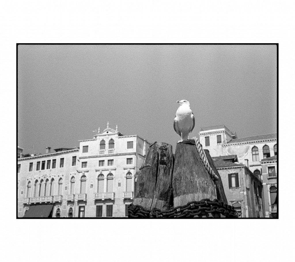 Venice-2020-16.jpg